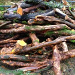 More woodfuel